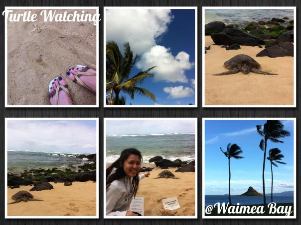 Waimea Bay Turtles